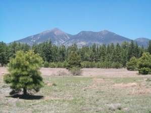 Image result for Flagstaff AZ  citzens cemetary