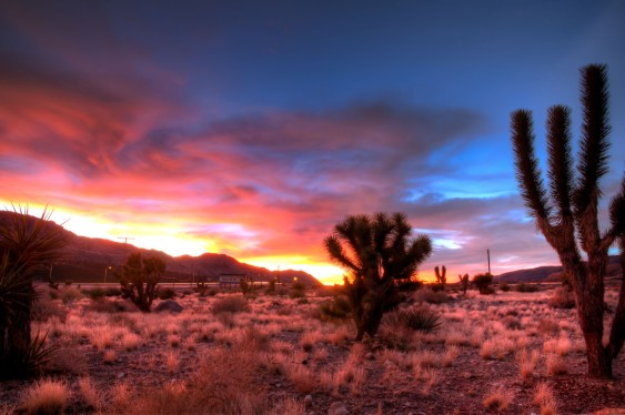 Image result for pics desert sunset