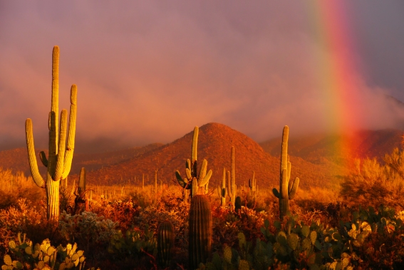Image result for pics sunset desert rainbow